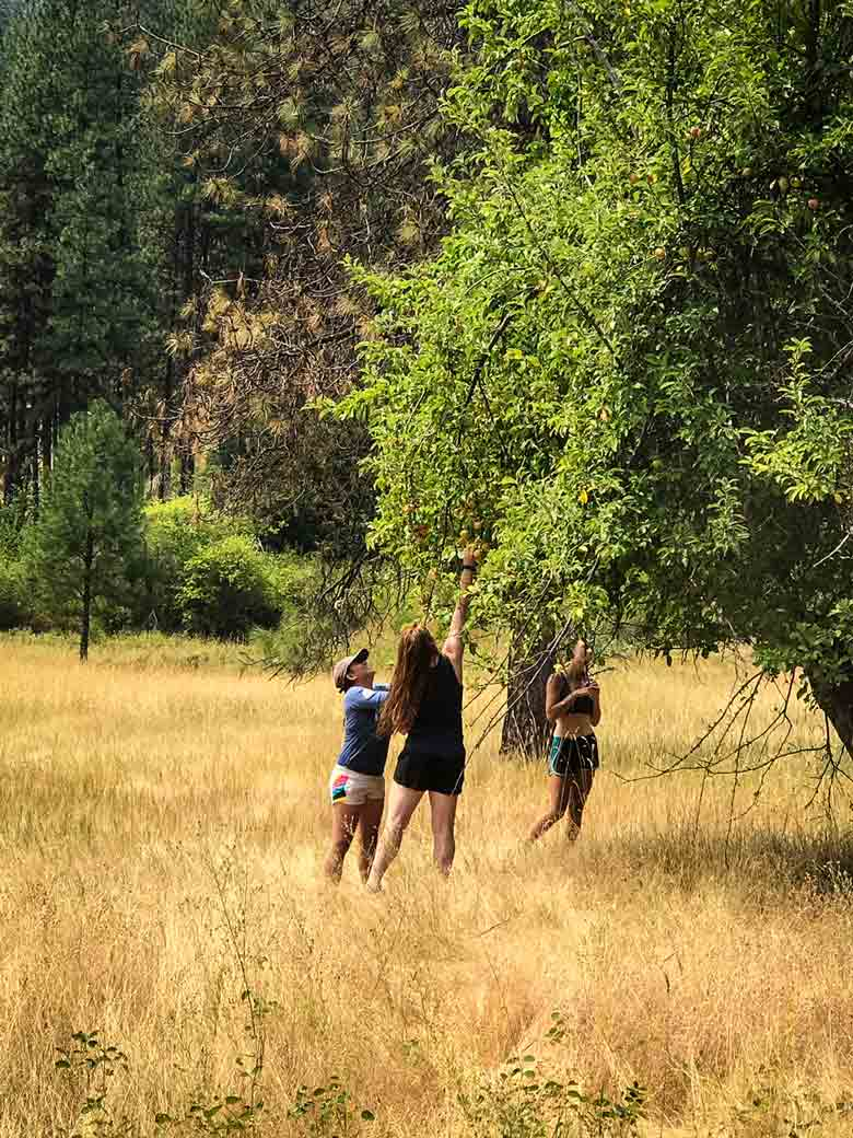 Three girls picking apples during a Main Salmon River Whitewater rafting vacation in Idaho.