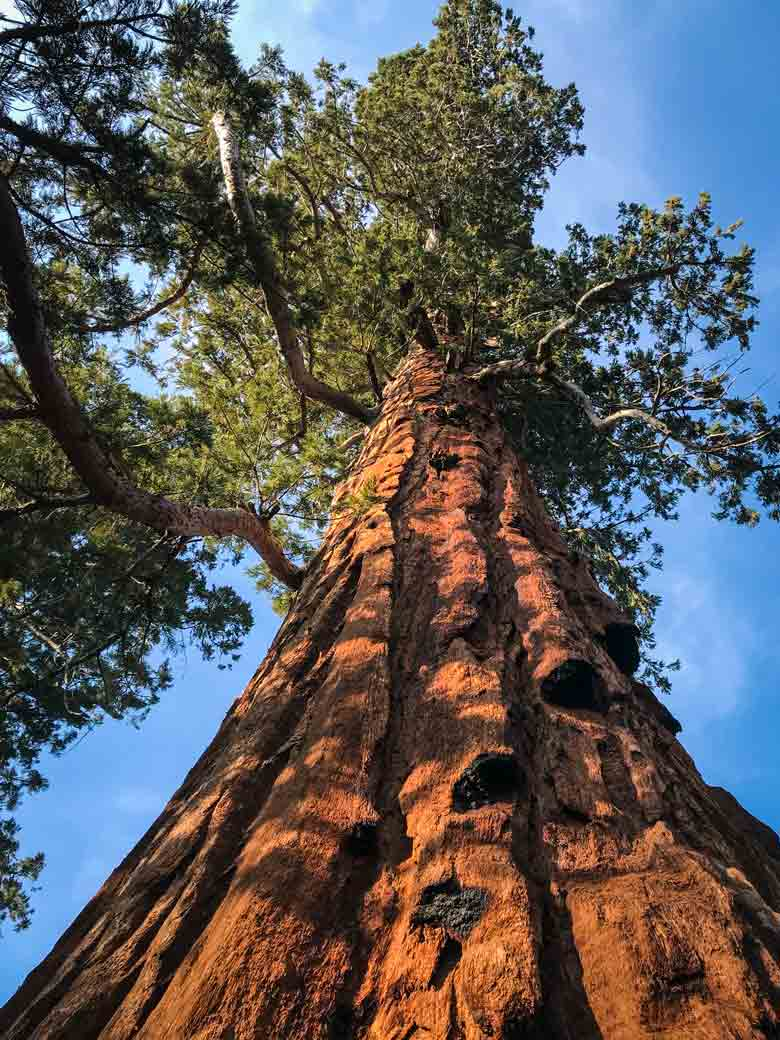 The Big Trees of the Sequoia National Forest are a must-see when visiting the Kern River Valley.